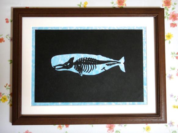 マッコウクジラの画像 p1_37