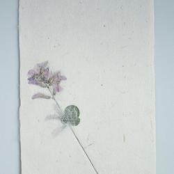 お花を贈る【植物入り和紙カード】ハギの花|封筒・メッセージカード付 | PAPER ART WORKSのカード・レター