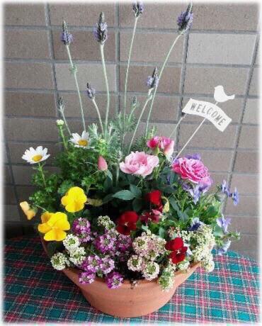春の花いっぱいかわいい寄せ植え|その他インテリア雑貨|Toshi ...